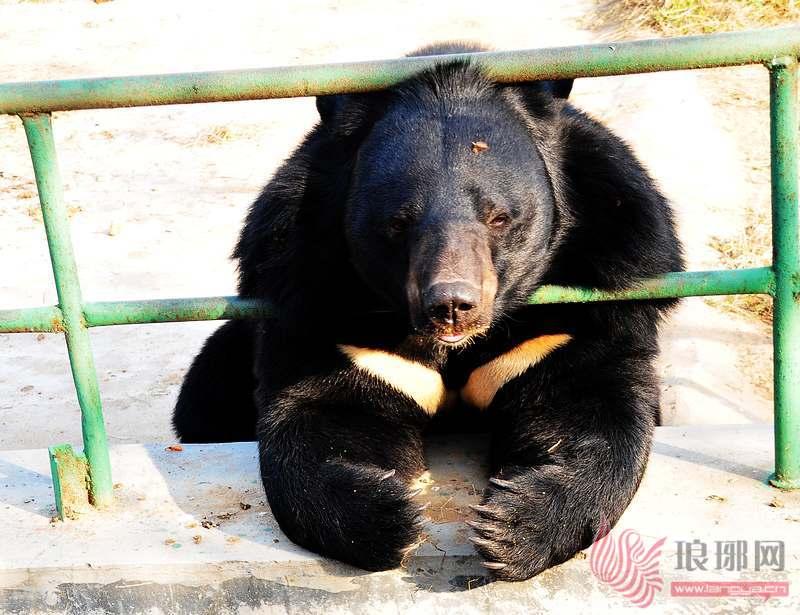 临沂动植物园动物过冬